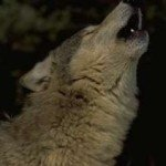 howling2